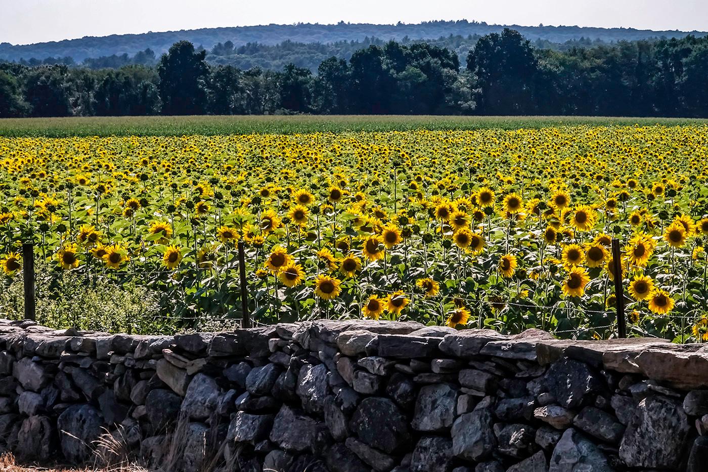 Buttonwood Farms - Audrey Schulde.jpg