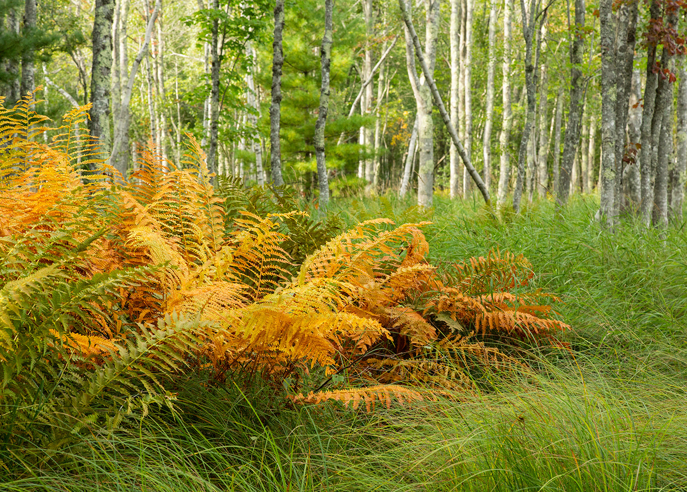 Early Fall Ferns_Diane Edwards_Second Pl
