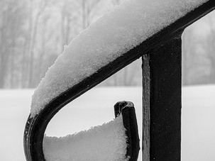 Snow Graced_Fred Tullock_First Place_Fir