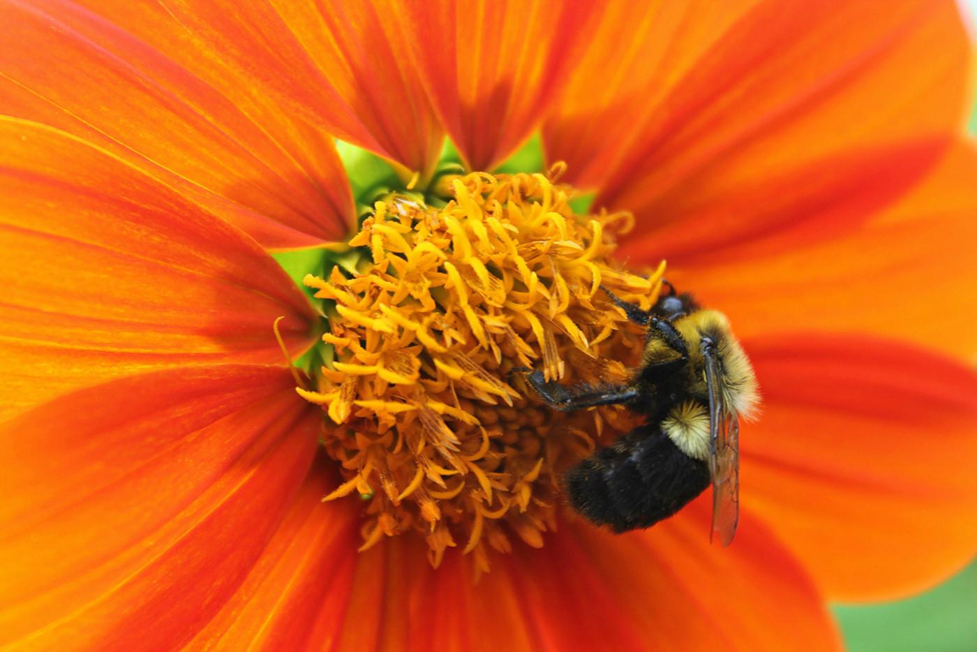 Busy Bee_Cheryl Martinelli_24.5_24.5.jpg