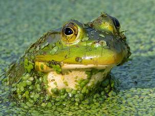 Waiter, theres a frog in my soup_Michael