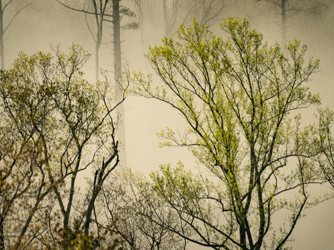 Early morning fog_Audrey Schulde_Third P