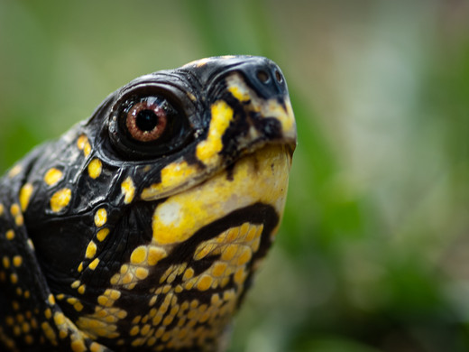 Turtle Vision_17_Larry Gleit
