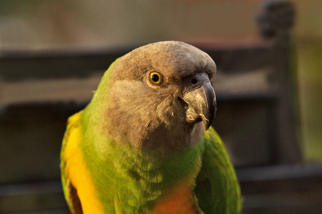 PEdwards,Parrot,MagicWings,2013.jpg