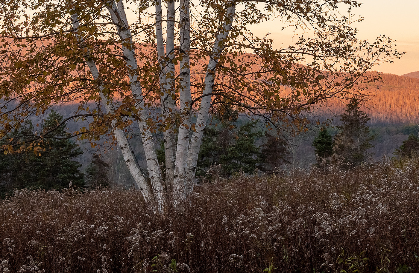 Sunrise Mt Greylock Reservation_24.jpg