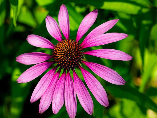 Symetrical Cone Flower_Paula Frizzo_Thir