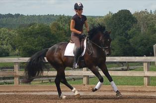 Stallion Performance Test