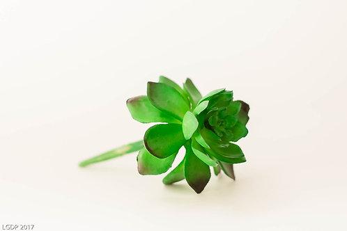 300 - Succulents