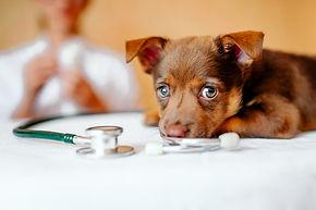 veterinario_119439-92.jpg