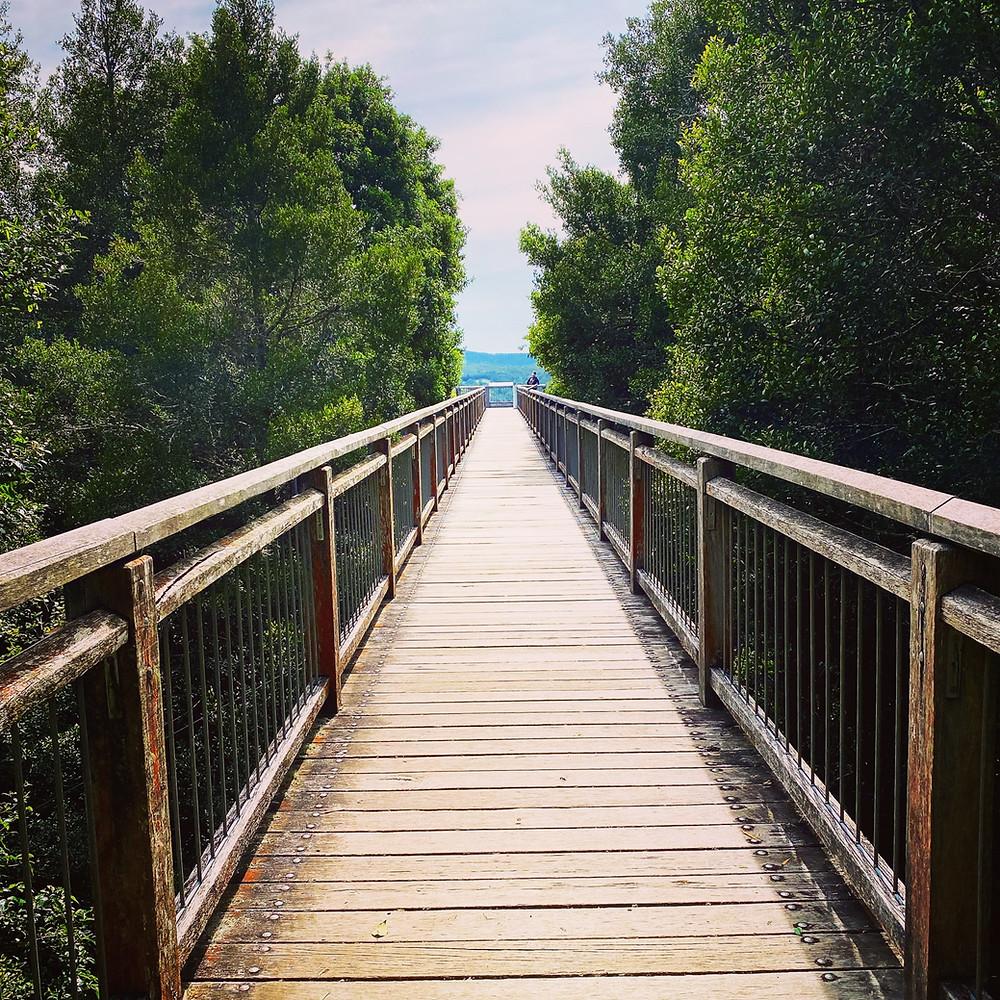 Skywalk Dorrigo National Park