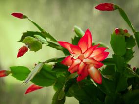 5 indoor plants to brighten your home
