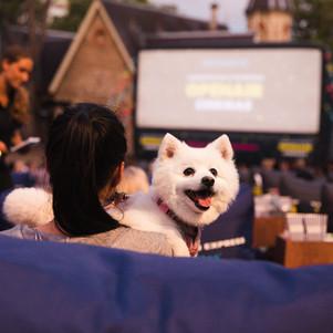 Review: American Express Open Air Cinemas in Bondi