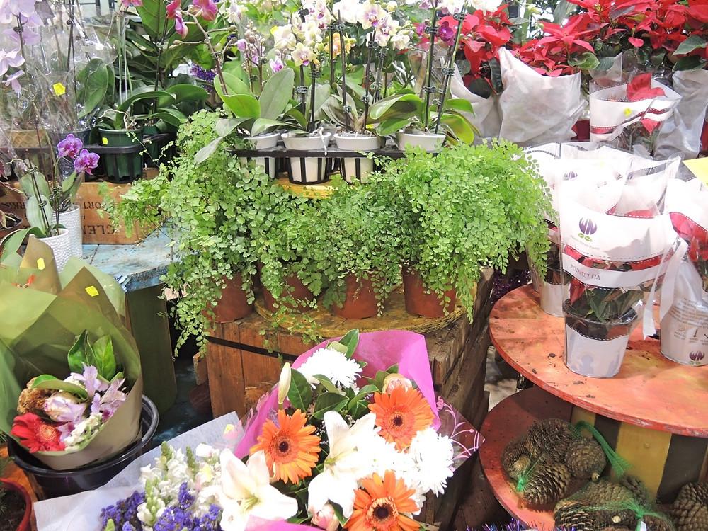 Harris Farm Markets Flowers