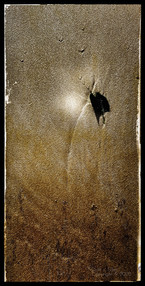 Last light Gypsy Swallowtail.jpeg