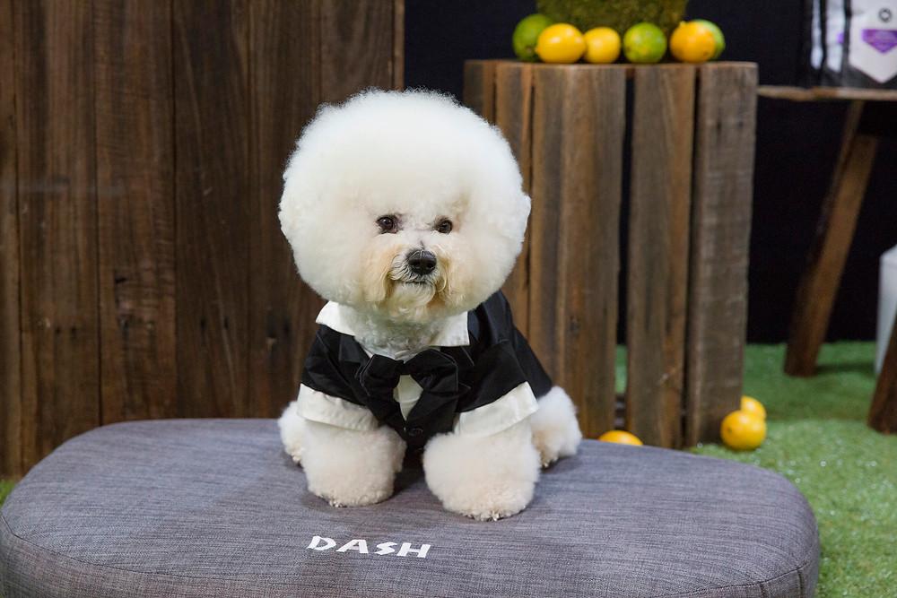 Dog Shows Sydney