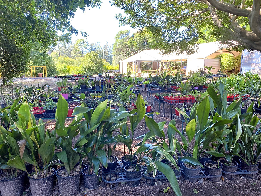 Garden Mania Boambee