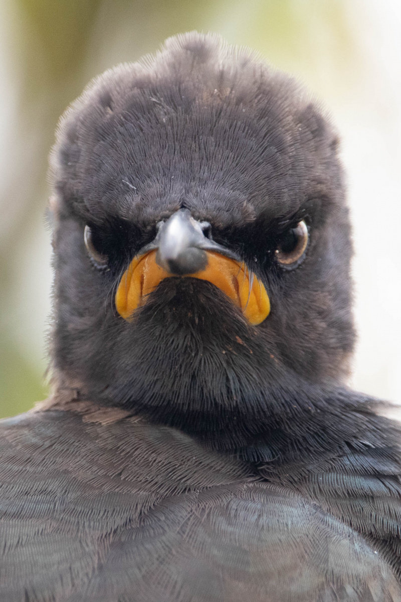 Funniest wildlife photos