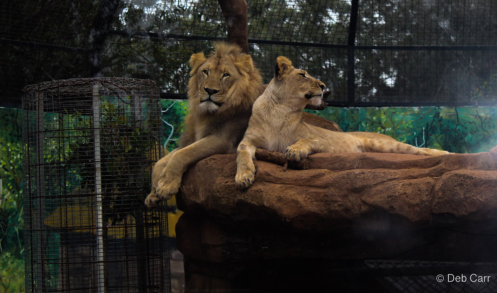 Billabong Zoo Port Macquarie