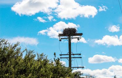 Osprey Nest NSW
