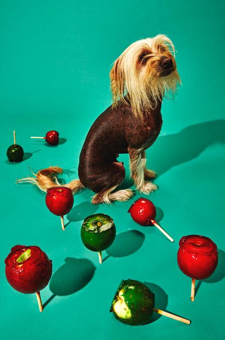 Pup Art book