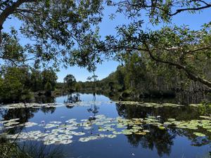 Urunga Wetlands Walk