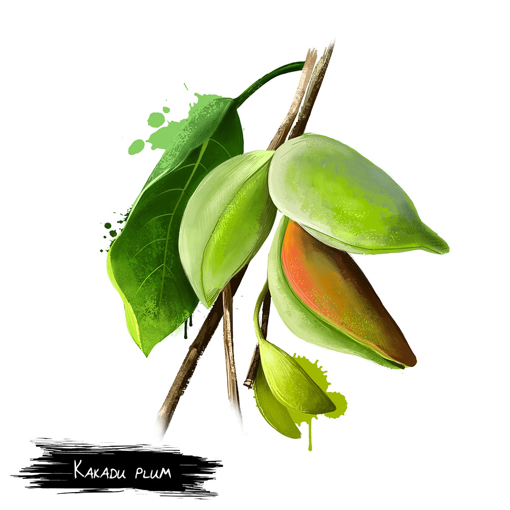 Kakadu Plum good for skin