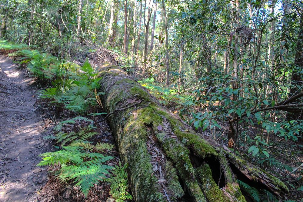 Tranquil Australian Forest