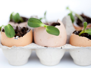 Five Ways to Reduce Waste in the Kitchen