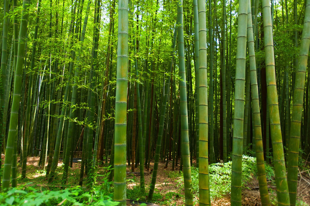 Organic bamboo clothing