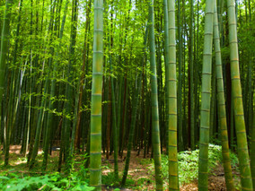 Organic Bamboo Clothing for Women