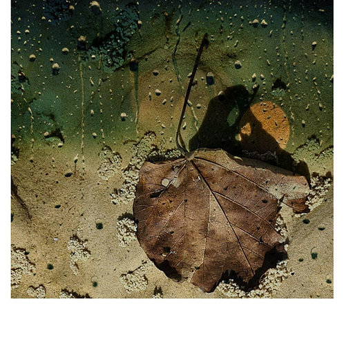 Raindrops Moon Butterfly