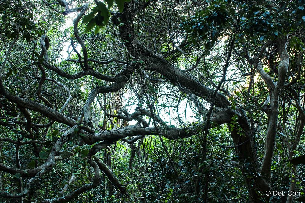 Rainforest walk between Seven Mile Beach and Elizabeth Beach