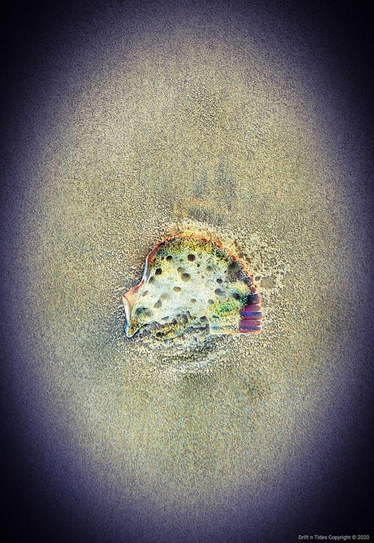 Effer - Pheasant the bubble chick