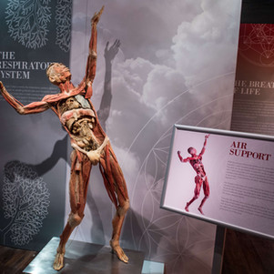 Real Bodies: The Exhibition – What Does It Mean To Be Human?