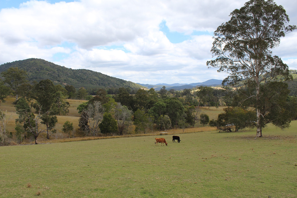 Ewetopia Farm NSW