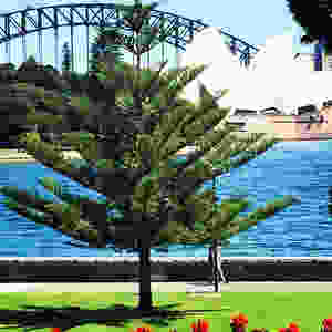 The Sydney Royal Botanical Gardens