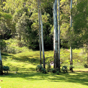 Airbnb Review Boambee NSW North Coast