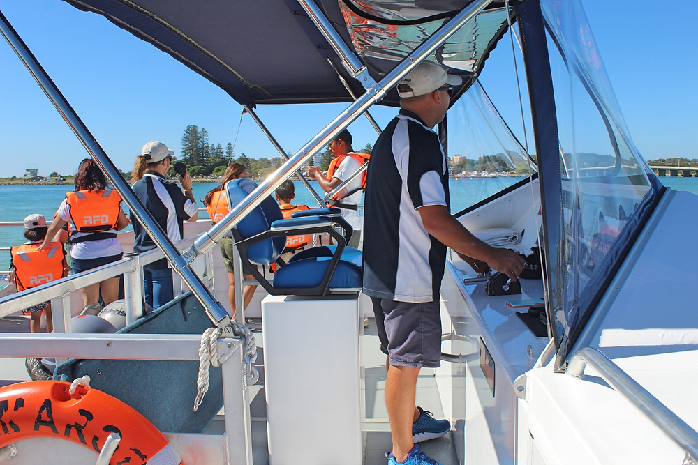 Whale watching Forster