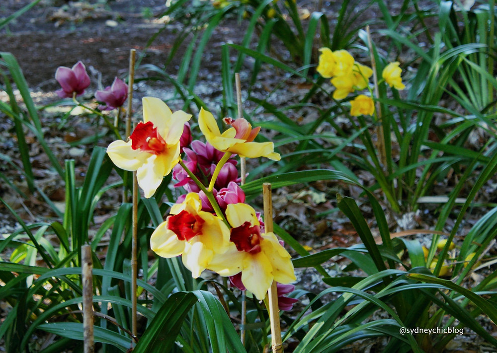 Orchids Royal Botanic Gardens