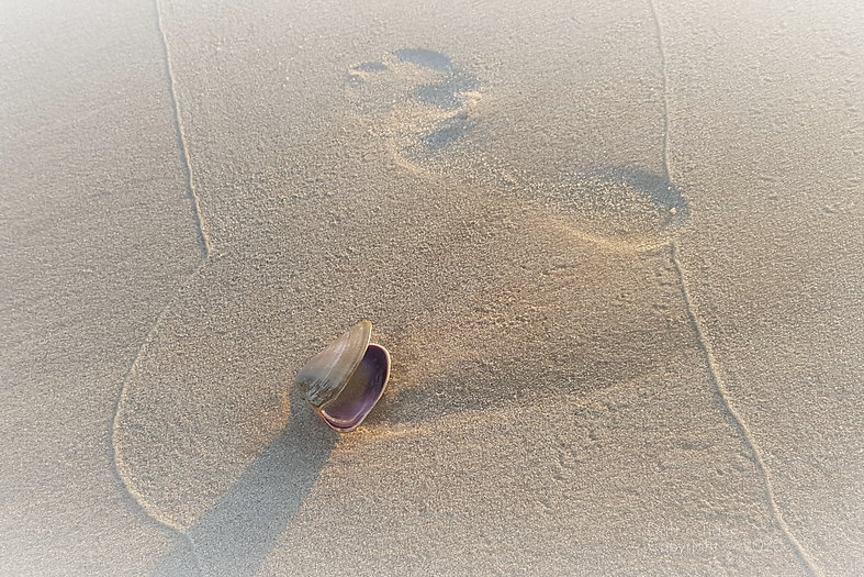 Footprint faded edge.jpg