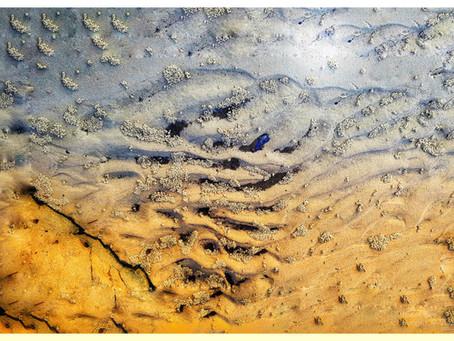 Mangroves Unearth Inspirational Drift behind Fine Art Prints