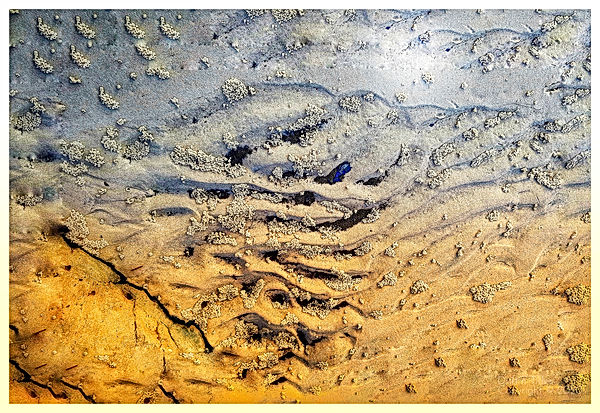 Mangrove Barren Landscape.jpg