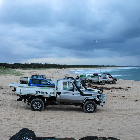 The Mullet Run Tuncurry