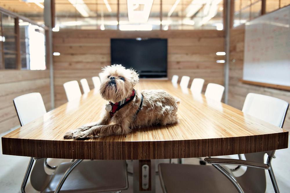 Pets At Work.jpg
