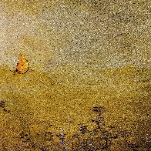 Saffron Swooping