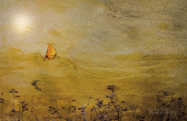 Saffron Swooping.jpg