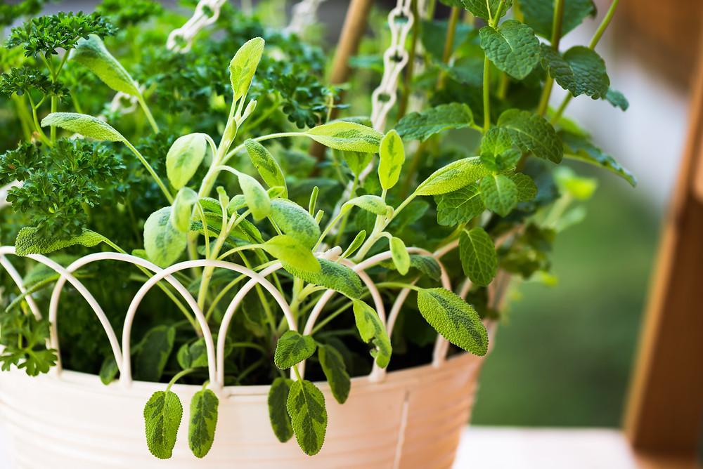 How to Grow an Edible Garden in a Small Apartment