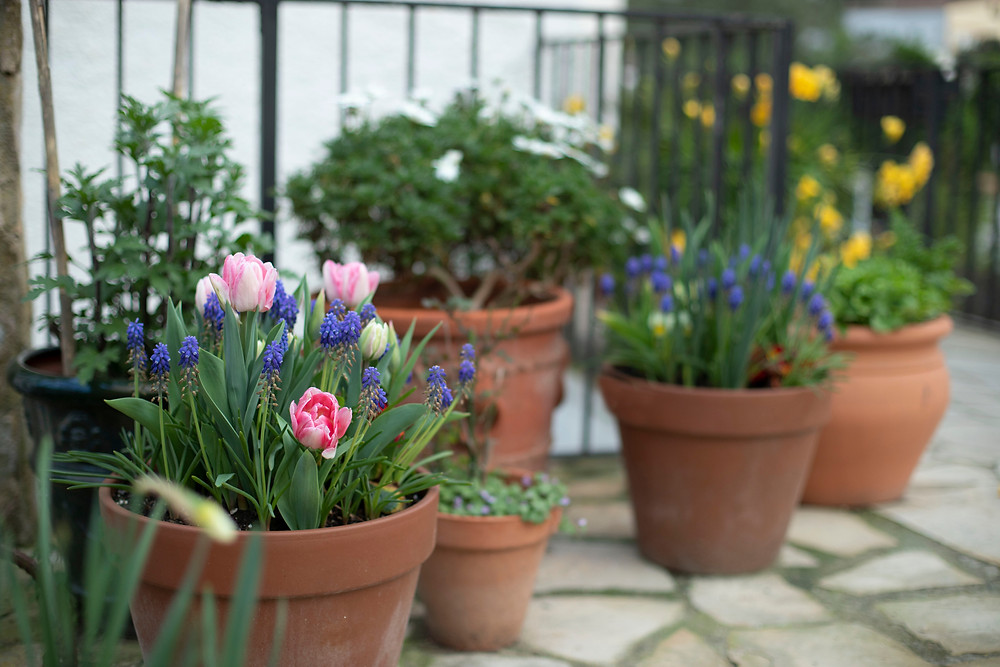 how to brighten up your garden space