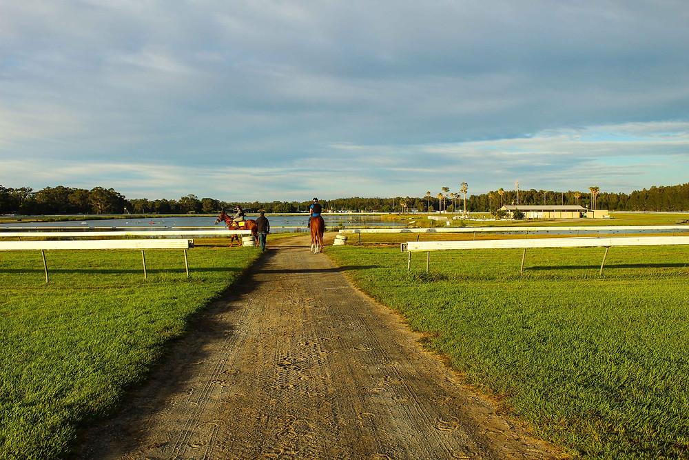 Horse trainers mid north coast