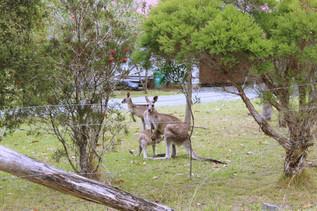 Coolongolook NSW